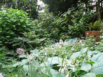 Bloeiende Hartlelie en Ooievaarsbek rondom het zitje midden in de tuin.
