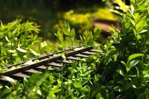Tuinonderhoud | Aanleg voor groen